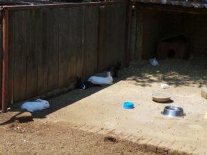 Rietvlei Zoo Farm